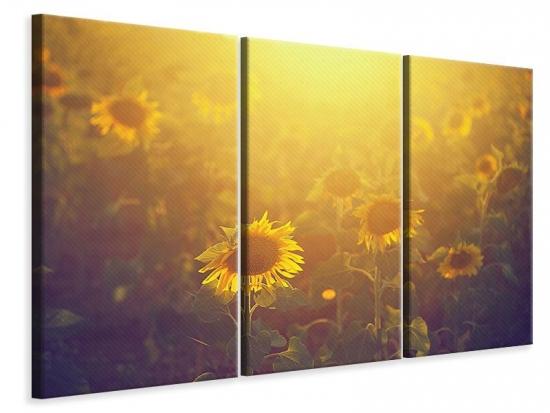 Leinwandbild 3-teilig Sonnenblumen im goldenen Licht