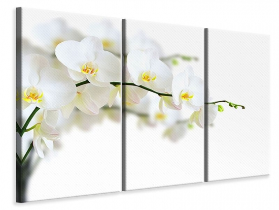 Leinwandbild 3-teilig Weisse Orchideen