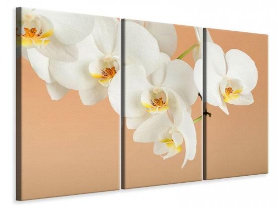 Leinwandbild 3-teilig Weisse Orchideenblüten