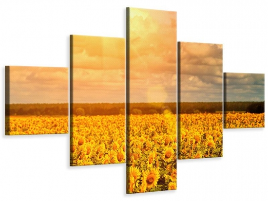 Leinwandbild 5-teilig Goldenes Licht für Sonnenblumen