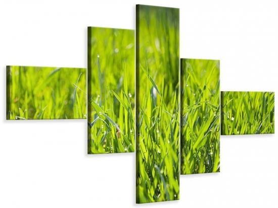 Leinwandbild 5-teilig modern Gras im Morgentau