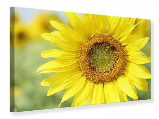Leinwandbild Die Blume der Sonne 75 x 50 cm