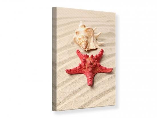 Leinwandbild Die Muschel und der Seestern 80 x 120 cm