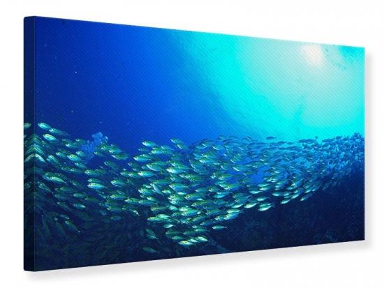 Leinwandbild Fischschwarm