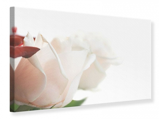 Leinwandbild Herrliche Rosen
