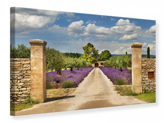 Leinwandbild Lavendel-Garten 120 x 80 cm