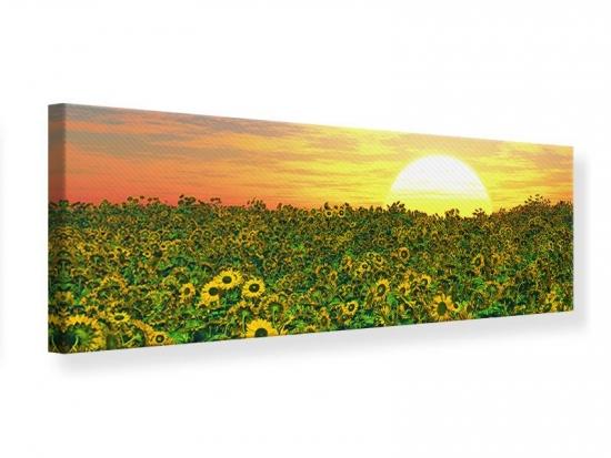 Leinwandbild Panorama Blumenpanorama bei Sonnenuntergang 150 x 50 cm