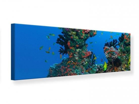 Leinwandbild Panorama Die Welt der Fische
