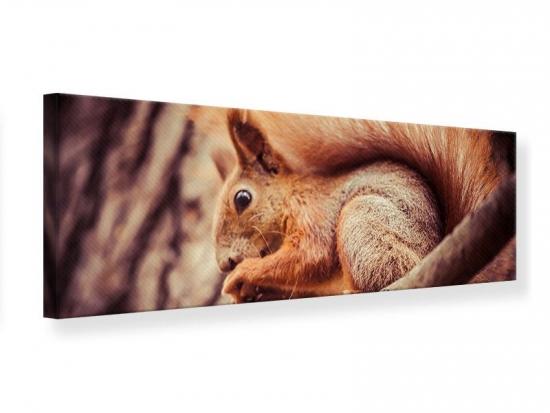 Leinwandbild Panorama Eichhörnchen 150 x 50 cm