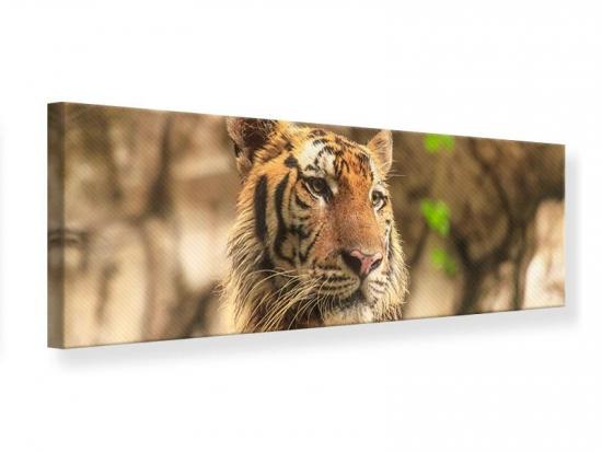 Leinwandbild Panorama Tiger