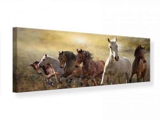 Leinwandbild Panorama Wilde Pferde 150 x 50 cm