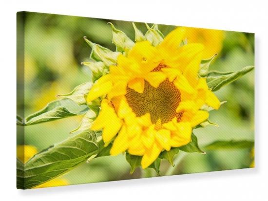 Leinwandbild Wilde Sonnenblume